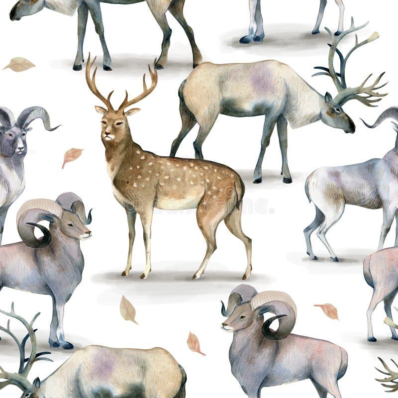 Άνευ ραφής ζωικό σχέδιο, υπόβαθρο Watercolor του αρσενικού ελαφιού, των ελαφιών και του πρόβειου κρέατος στο λευκό ελεύθερη απεικόνιση δικαιώματος