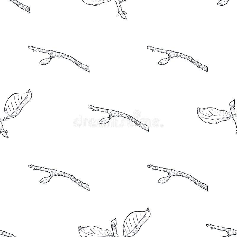 Άνευ ραφής κλάδος σχεδίων με τα πράσινα φύλλα Σχέδιο, διανυσματική απεικόνιση, άσπρο υπόβαθρο ελεύθερη απεικόνιση δικαιώματος