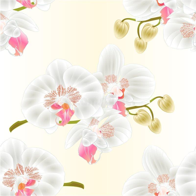 Άνευ ραφής ορχιδέα άσπρο Phalaenopsis σύστασης απεικόνιση αποθεμάτων