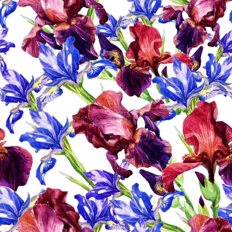 Άνευ ραφής σχέδιο από τις ίριδες στο watercolor διανυσματική απεικόνιση