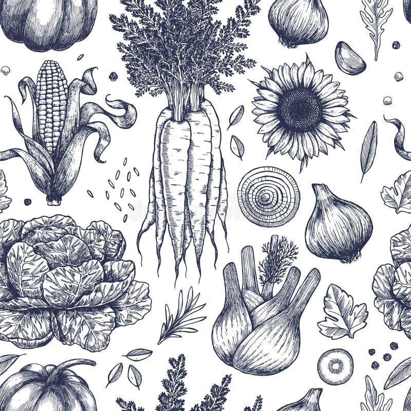 Άνευ ραφής σχέδιο λαχανικών φθινοπώρου Εκλεκτής ποιότητας λαχανικά Handsketched τέχνη εξαρτημάτων μοντέρνη η γυναίκα γραμμών απει διανυσματική απεικόνιση