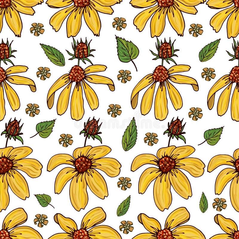 Άνευ ραφής σχέδιο με κίτρινα Rudbeckia και τα χορτάρια διανυσματική απεικόνιση