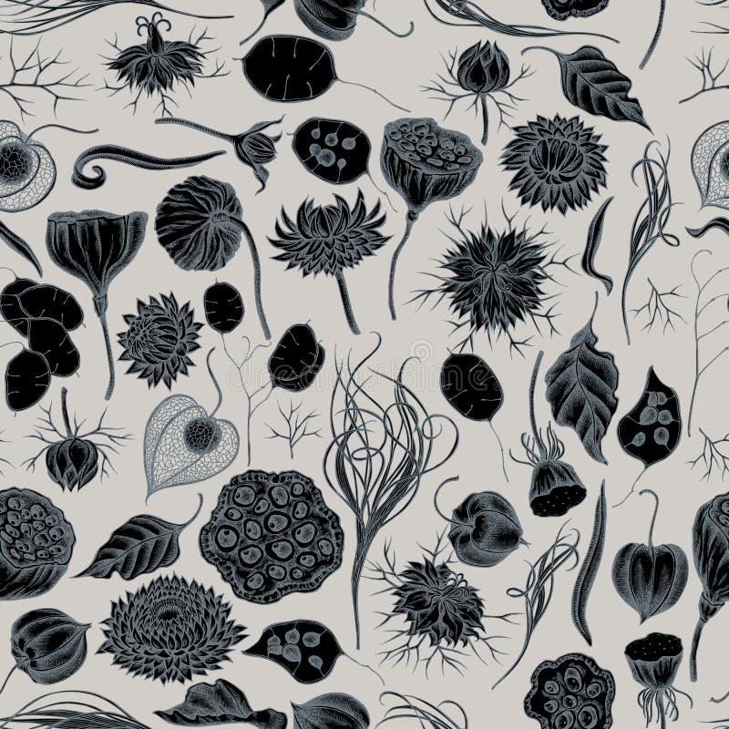 Άνευ ραφής σχέδιο με συρμένο το χέρι τυποποιημένο μαύρο το κυμινοειδές κάρο, χλόη φτερών, helichrysum, λωτός, lunaria, physalis διανυσματική απεικόνιση