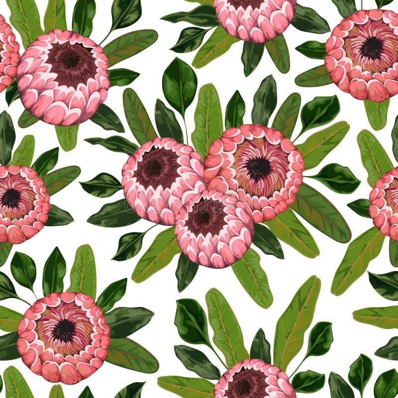 Άνευ ραφής σχέδιο με τα λουλούδια και τα φύλλα protea Διακοσμητικό floral υπόβαθρο διακοπών διανυσματική απεικόνιση