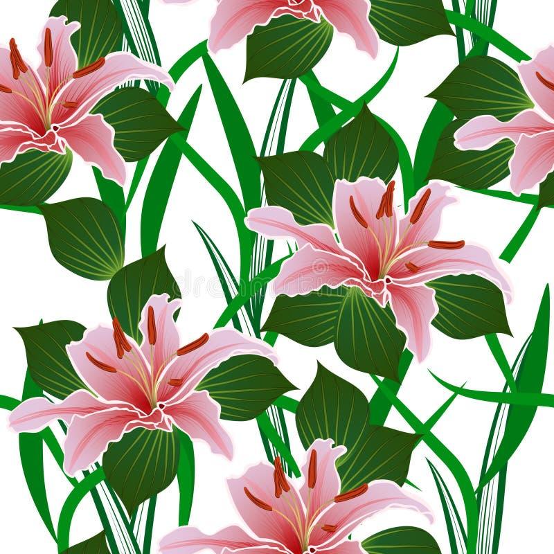 Άνευ ραφής σχέδιο με τα λουλούδια κρίνων διανυσματική απεικόνιση