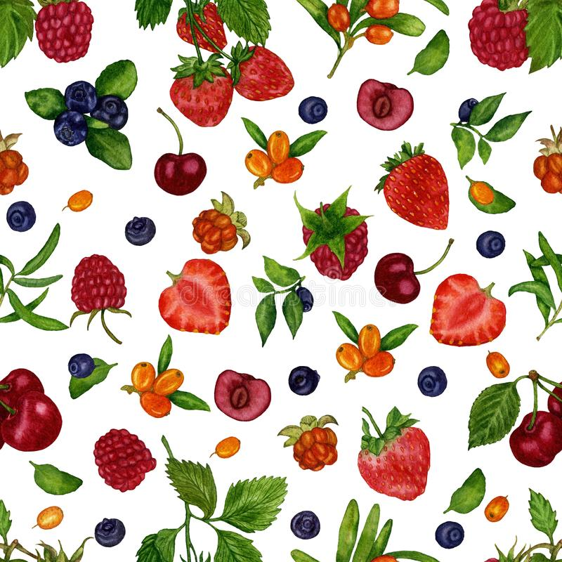 Άνευ ραφής σχέδιο με τα σμέουρα μούρων, cloudberries, βακκίνια, βακκίνια, φράουλες, θάλασσα-buckthorn σε ένα άσπρο backgroud απεικόνιση αποθεμάτων