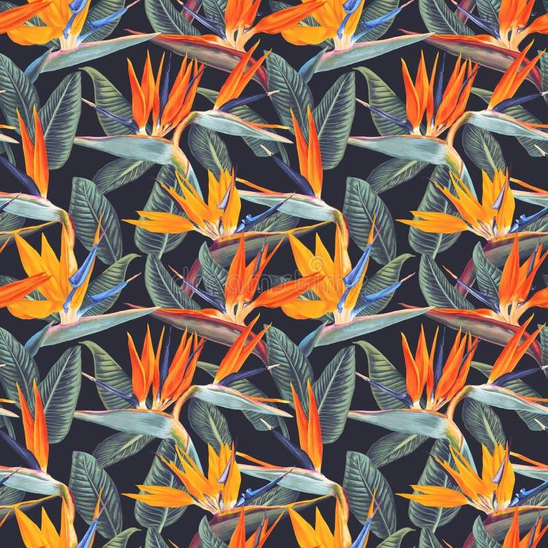 Άνευ ραφής σχέδιο με τα τροπικά λουλούδια και τα φύλλα Strelitzia Reginae στο σκοτεινό υπόβαθρο απεικόνιση αποθεμάτων