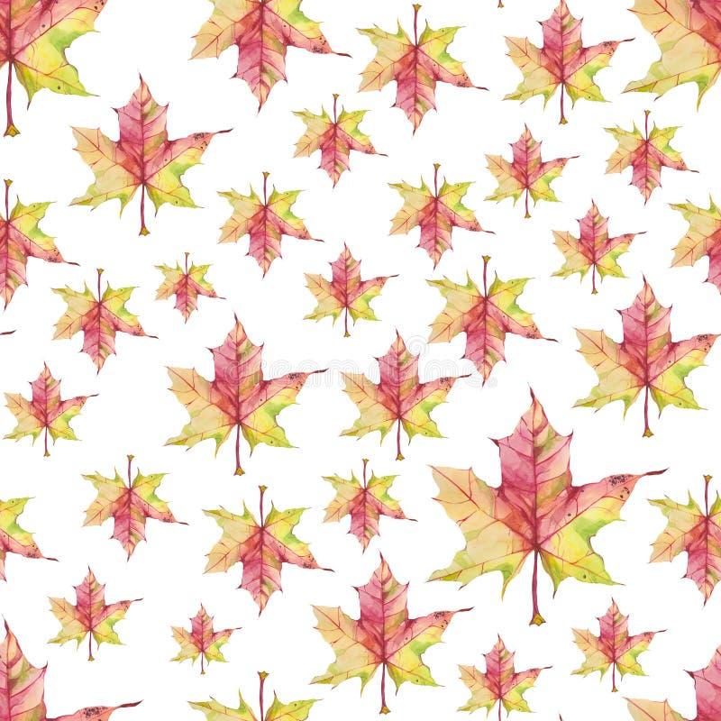 Άνευ ραφής σχέδιο με τα φύλλα σφενδάμου watercolor στο άσπρο υπόβαθρο ελεύθερη απεικόνιση δικαιώματος