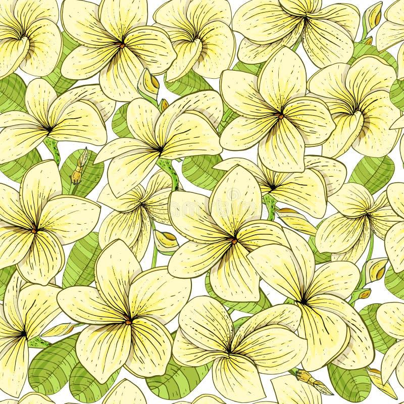 Άνευ ραφής σχέδιο με το λουλούδι Plumeria ναών διανυσματική απεικόνιση