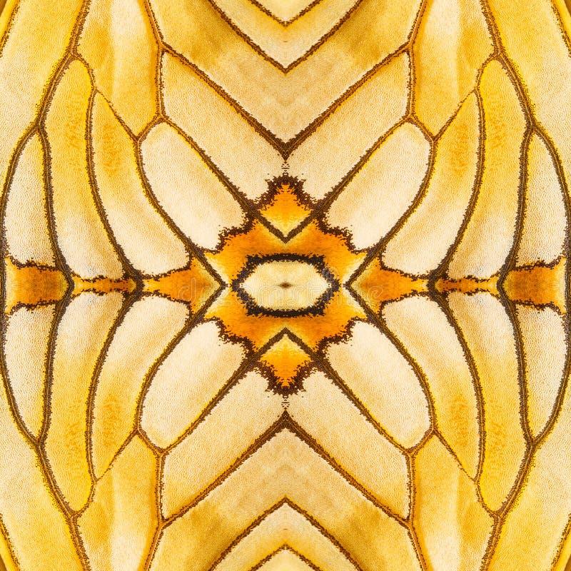 Άνευ ραφής σχέδιο που γίνεται από το ζωηρόχρωμο φτερό πεταλούδων για το backgroun στοκ φωτογραφία με δικαίωμα ελεύθερης χρήσης
