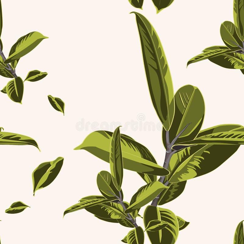 Άνευ ραφής σχέδιο, πράσινα φωτεινά φύλλα Ficus Elastica στο άσπρο υπόβαθρο επίσης corel σύρετε το διάνυσμα απεικόνισης διανυσματική απεικόνιση