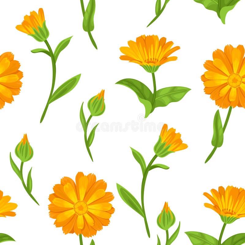 Άνευ ραφής σχέδιο Calendula Πορτοκαλιά φωτεινά λουλούδια ελεύθερη απεικόνιση δικαιώματος