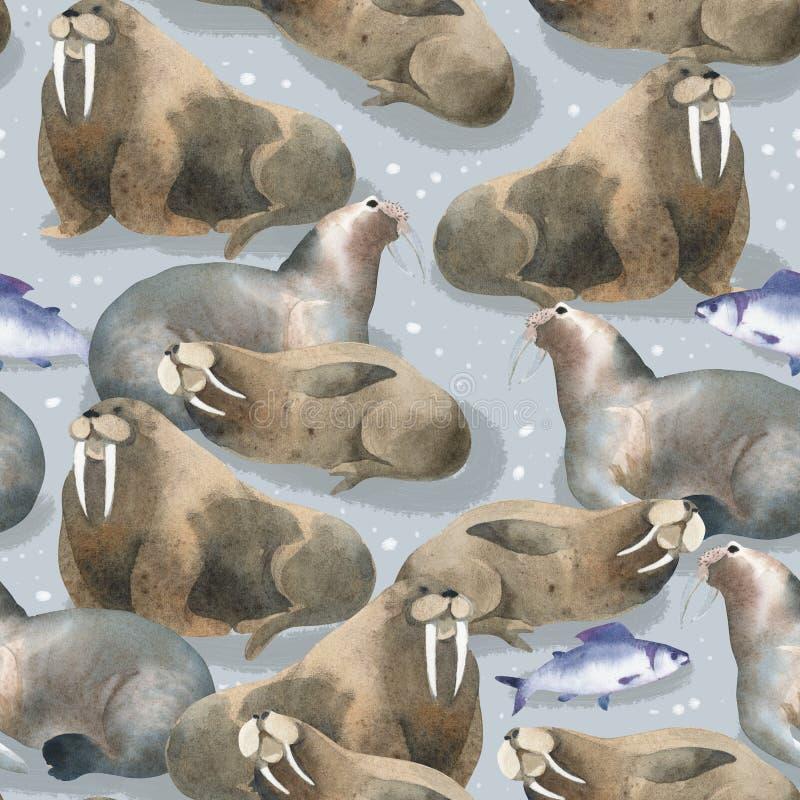 Άνευ ραφής σχέδιο watercolor για τη βόρεια πανίδα Ζώο και ψάρια θάλασσας Καφετί warlus στο χιόνι ελεύθερη απεικόνιση δικαιώματος