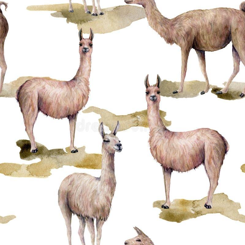 Άνευ ραφής σχέδιο Watercolor με llama στο έδαφος Το χέρι χρωμάτισε την όμορφη απεικόνιση με το ζώο που απομονώθηκε στο λευκό ελεύθερη απεικόνιση δικαιώματος