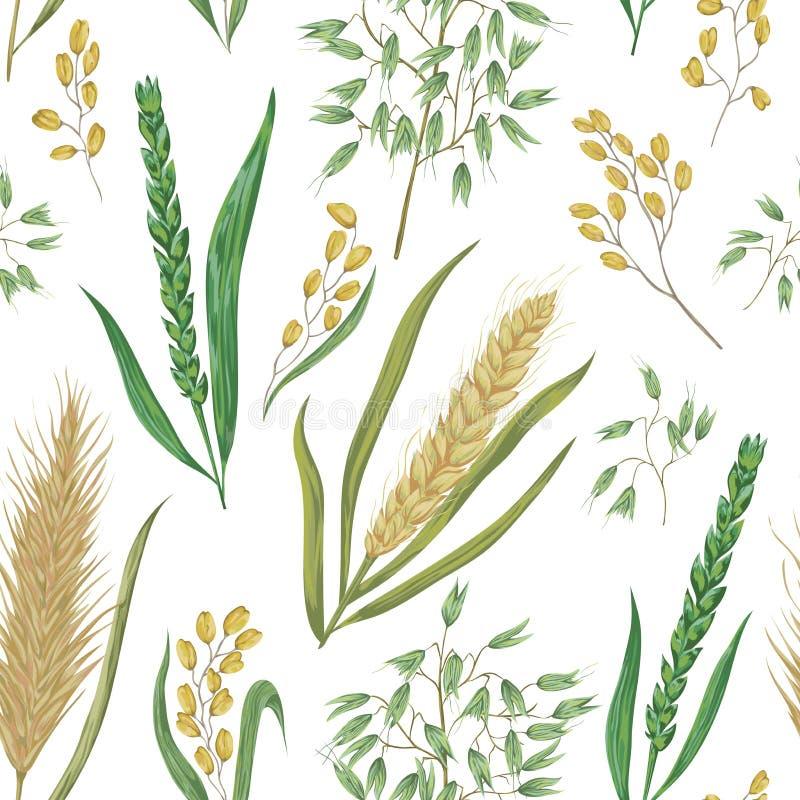 Άνευ ραφής σχέδιο με τα δημητριακά Κριθάρι, σίτος, σίκαλη, ρύζι και βρώμη διανυσματική απεικόνιση