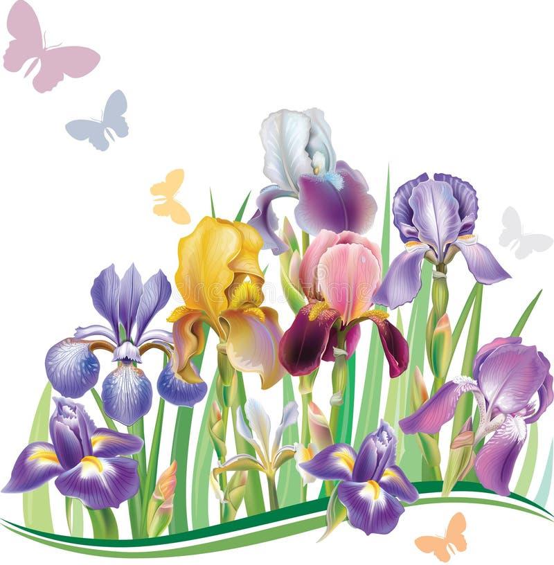 Άνευ ραφής σχέδιο με τη Iris απεικόνιση αποθεμάτων