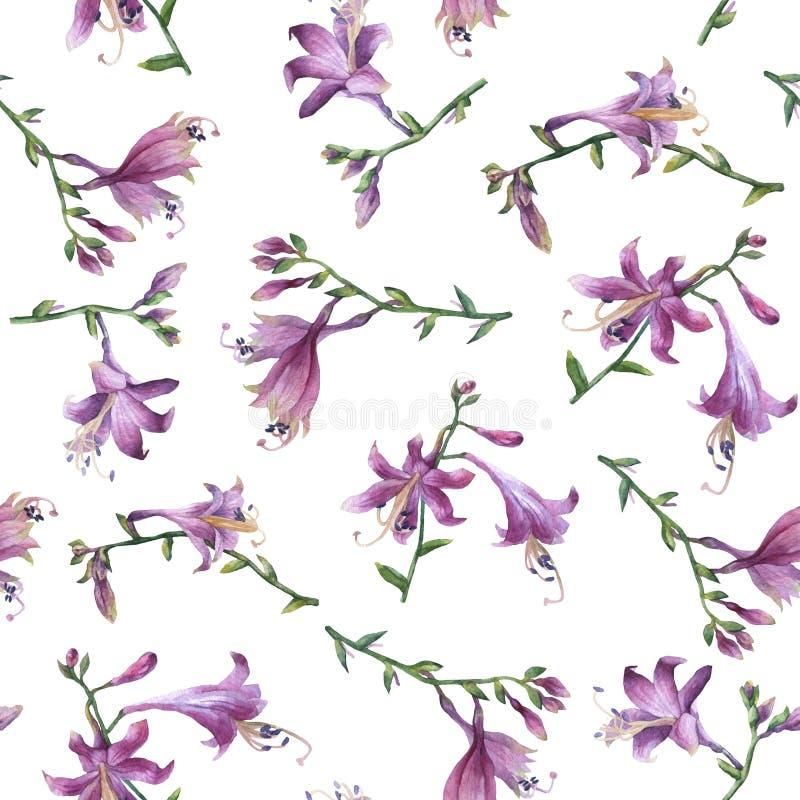 Άνευ ραφής σχέδιο με τον κλάδο του πορφυρού λουλουδιού hosta κρίνοι Ανήλικος ventricosa Hosta, οικογένεια asparagaceae απεικόνιση αποθεμάτων