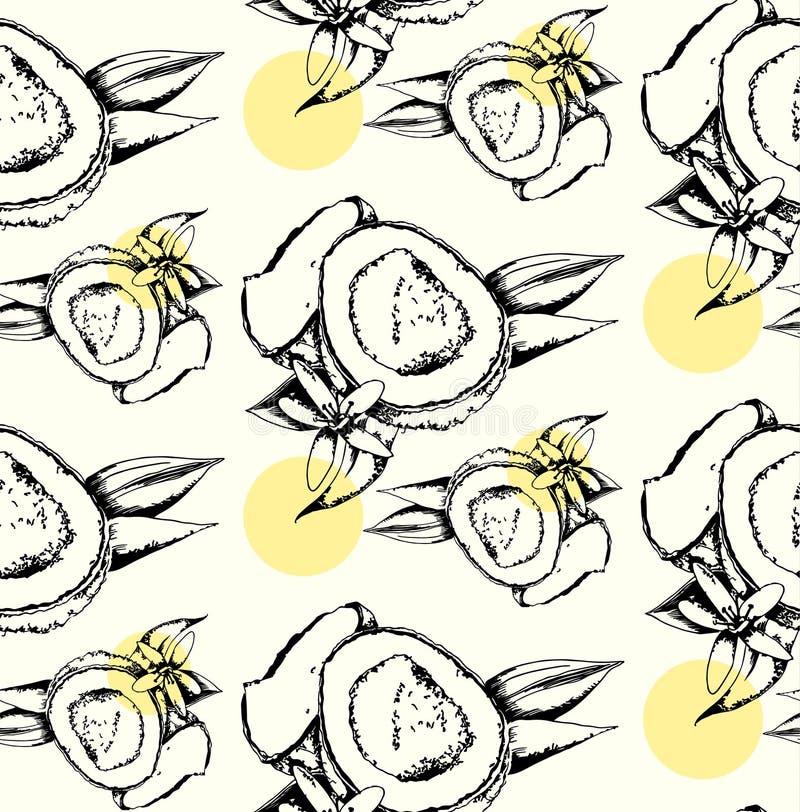 Άνευ ραφής σχέδιο της καρύδας ελεύθερη απεικόνιση δικαιώματος
