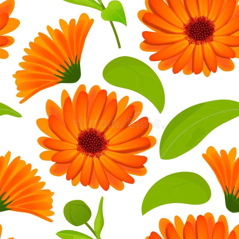 Άνευ ραφής σχέδιο Calendula λουλούδια με τα φύλλα στο λευκό απεικόνιση αποθεμάτων