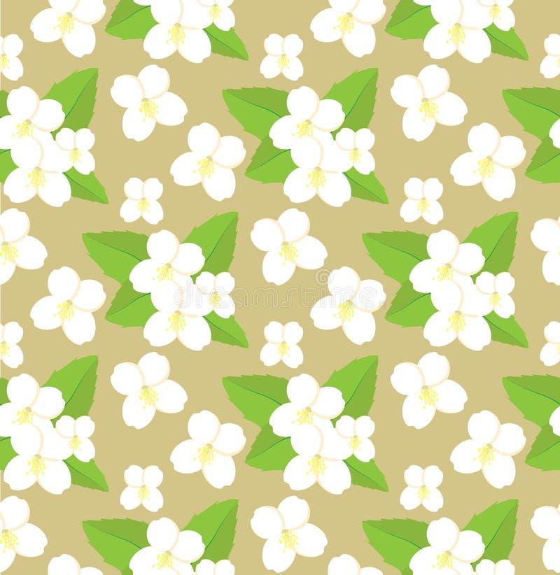 Άνευ ραφής σχέδιο jasmine των λουλουδιών διανυσματική απεικόνιση