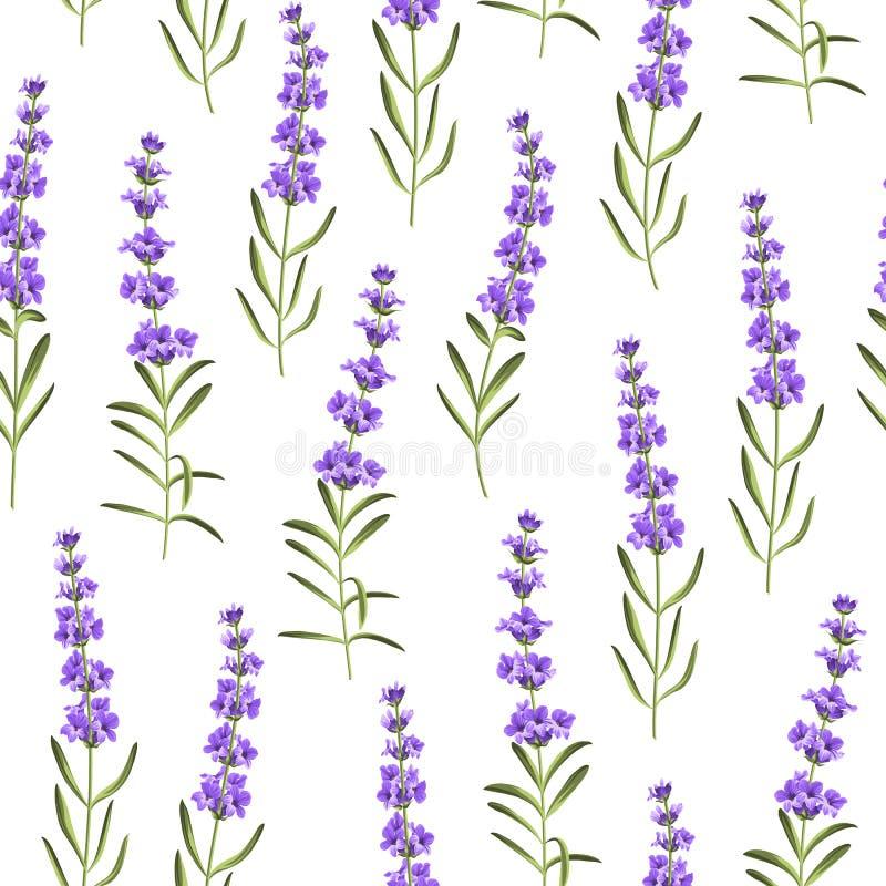 Άνευ ραφής σχέδιο lavender των λουλουδιών απεικόνιση αποθεμάτων