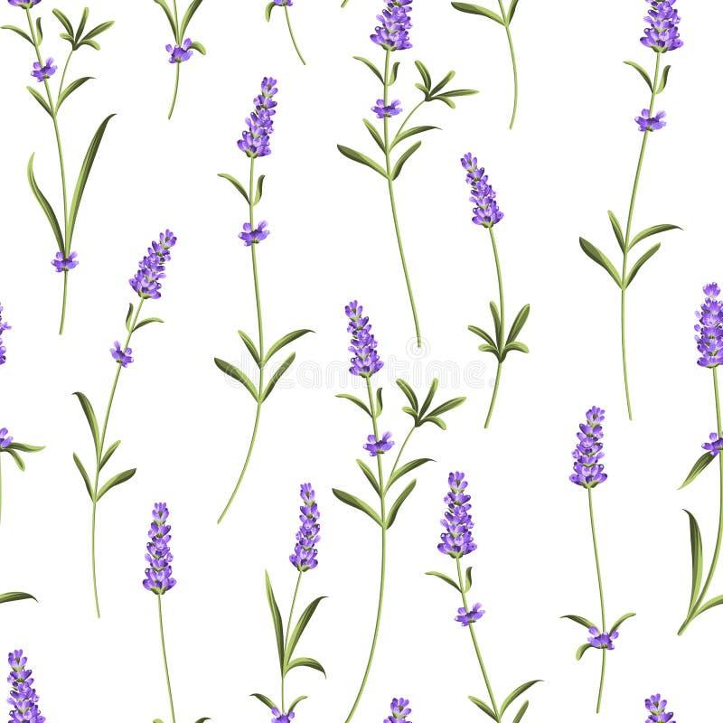 Άνευ ραφής σχέδιο lavender διανυσματική απεικόνιση