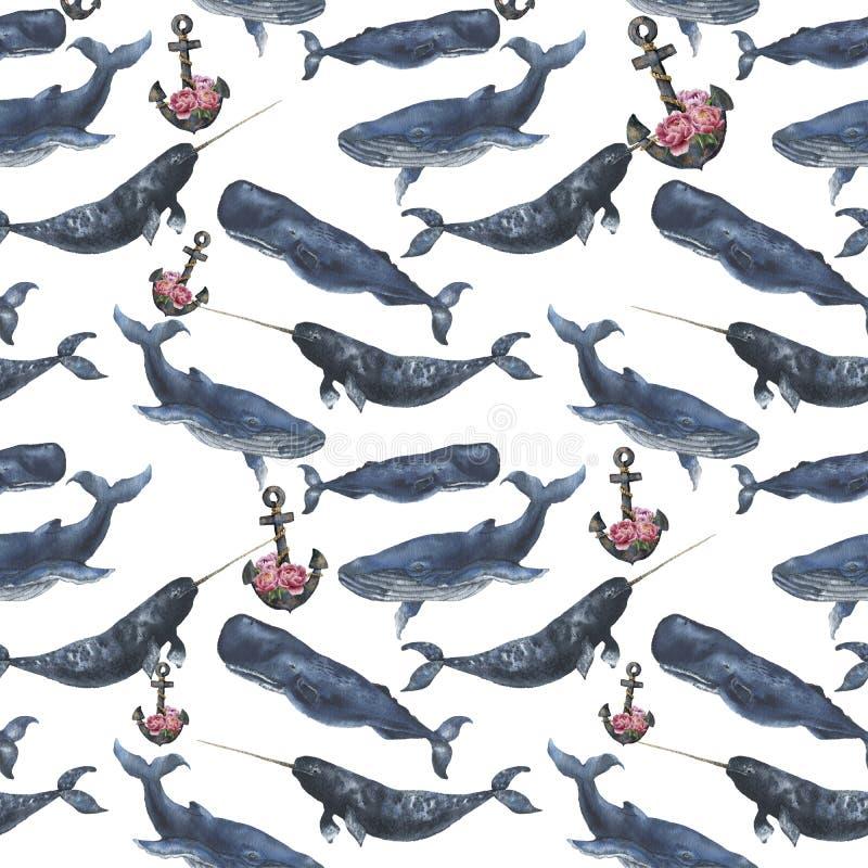 Άνευ ραφής σχέδιο Watercolor με τις φάλαινες και άγκυρα με τα peony λουλούδια Η απεικόνιση με τις γαλάζιες φάλαινες, cachalot και διανυσματική απεικόνιση