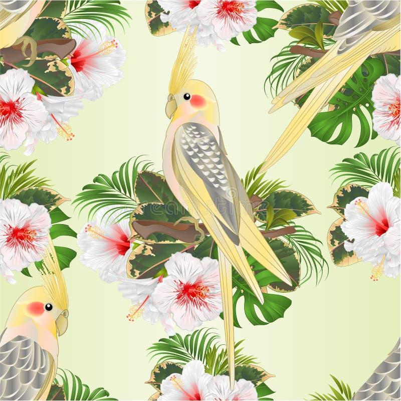 Άνευ ραφής σύστασης κίτρινοι αστείοι παπαγάλοι πουλιών cockatiels χαριτωμένοι τροπικοί και άσπρο hibiscus ύφος watercolor σε ένα  ελεύθερη απεικόνιση δικαιώματος