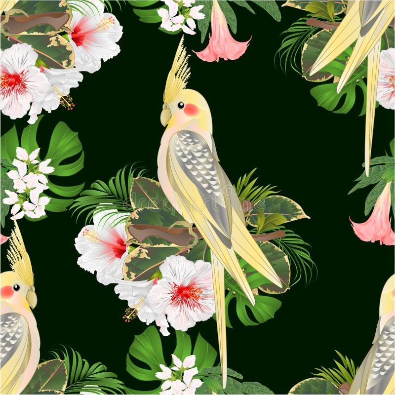 Άνευ ραφής σύστασης κίτρινος αστείος παπαγάλος πουλιών cockatiel χαριτωμένος τροπικός και άσπρο hibiscus ύφος watercolor σε ένα π απεικόνιση αποθεμάτων