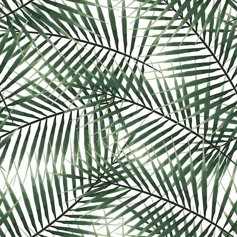 Άνευ ραφής τροπικά φύλλα φοινικών σχεδίων πράσινα εξωτικά στο άσπρο υπόβαθρο στοκ φωτογραφίες με δικαίωμα ελεύθερης χρήσης