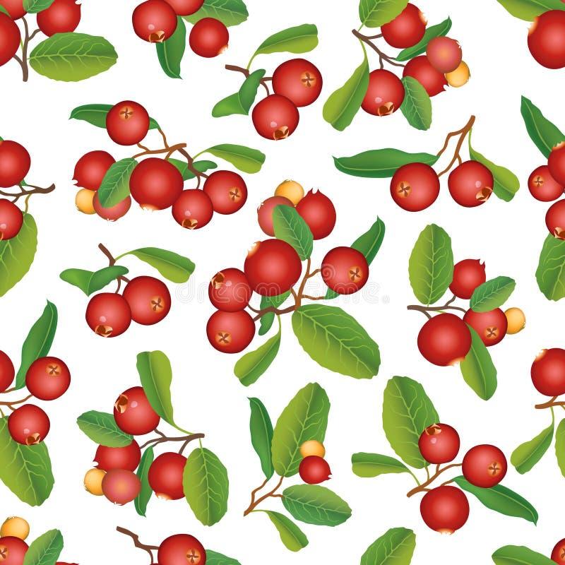 Άνευ ραφής υπόβαθρο των βακκίνιων. Ώριμα κόκκινα τα βακκίνια με τα φύλλα. Διανυσματική απεικόνιση. απεικόνιση αποθεμάτων