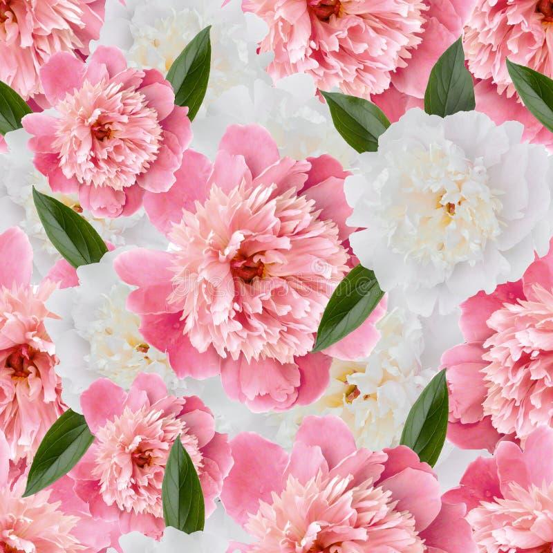 Άνευ ραφής floral σχέδιο με τα ρόδινα peonies διανυσματική απεικόνιση