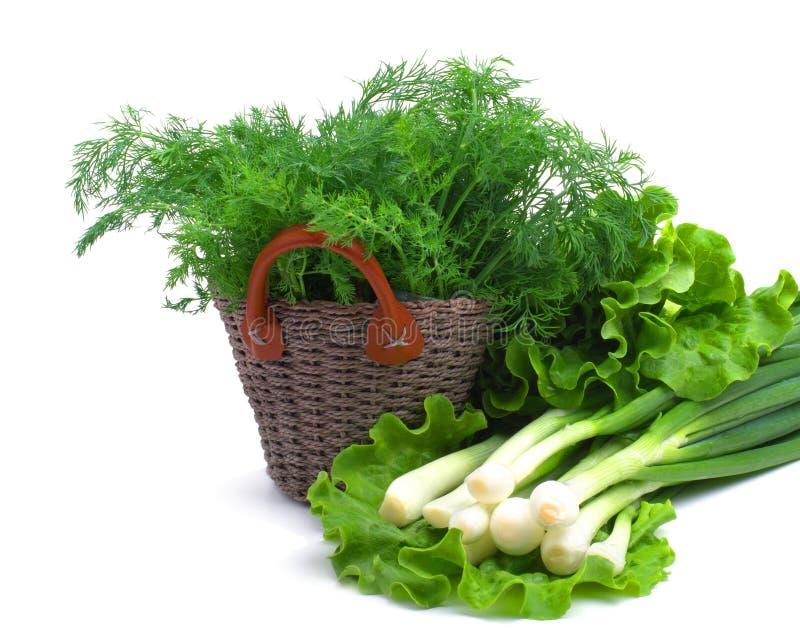 Άνηθος, πράσινο κρεμμύδι και σγουρή σαλάτα στοκ φωτογραφία με δικαίωμα ελεύθερης χρήσης