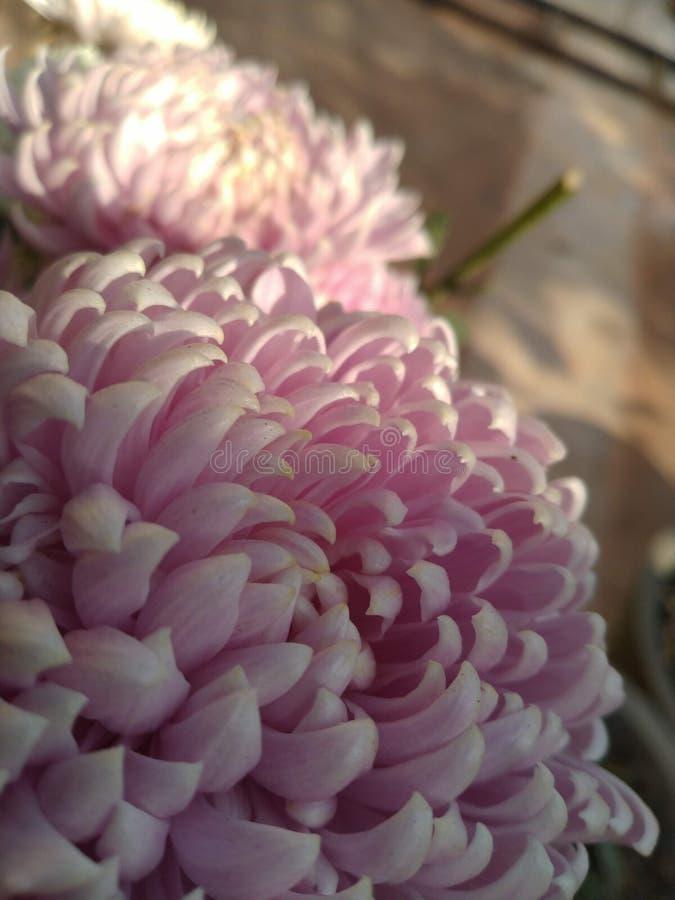Άνθη στοκ εικόνα