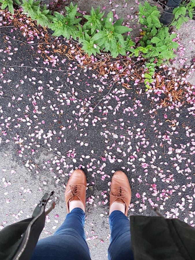 Άνθη κερασιών στοκ φωτογραφία