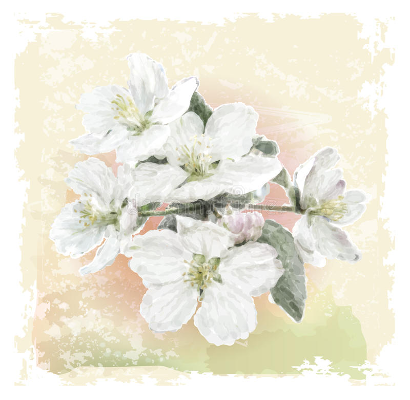 Άνθη λουλουδιών της Apple ελεύθερη απεικόνιση δικαιώματος