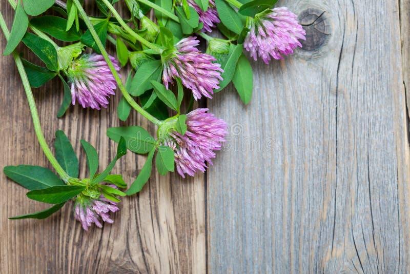 Άνθη τριφυλλιού σε ένα κλίμα των παλαιών ξύλινων σανίδων στοκ εικόνες