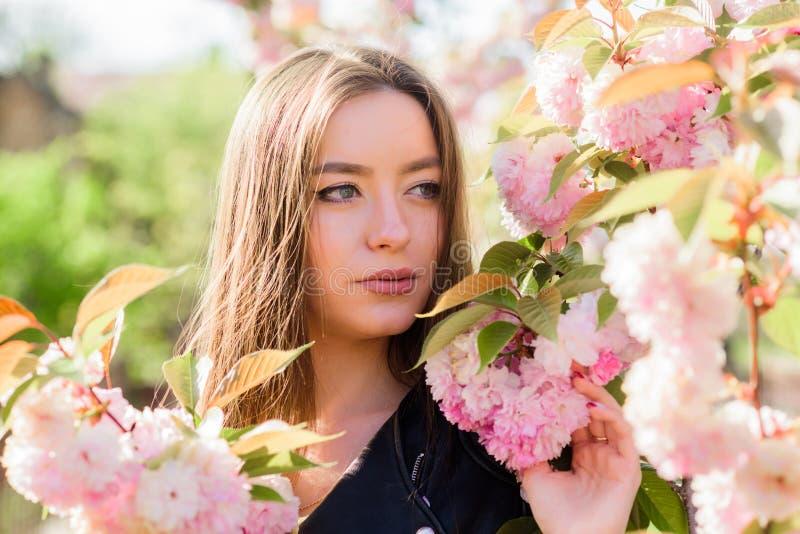 Άνθιση δέντρων Sakura Μαλακός και τρυφερός r Ρόδινος παράδεισος Η γυναίκα ανθίζει την άνοιξη την άνθιση στοκ φωτογραφία με δικαίωμα ελεύθερης χρήσης
