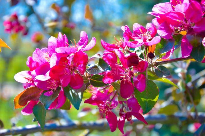 Άνθισμα άνοιξη ενός δέντρου στοκ φωτογραφία με δικαίωμα ελεύθερης χρήσης