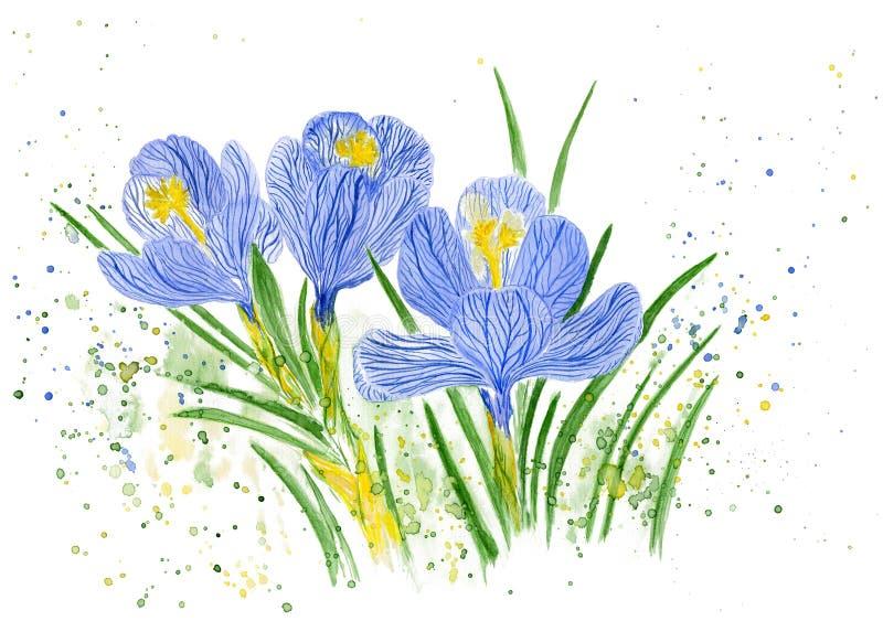 άνθισμα κρόκων η διακοσμητική εικόνα απεικόνισης πετάγματος ραμφών το κομμάτι εγγράφου της καταπίνει το watercolor διανυσματική απεικόνιση