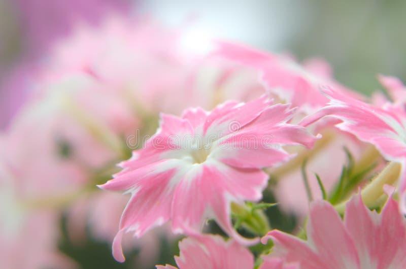 Άνθισμα σε ένα κλίμα των λουλουδιών στοκ φωτογραφία