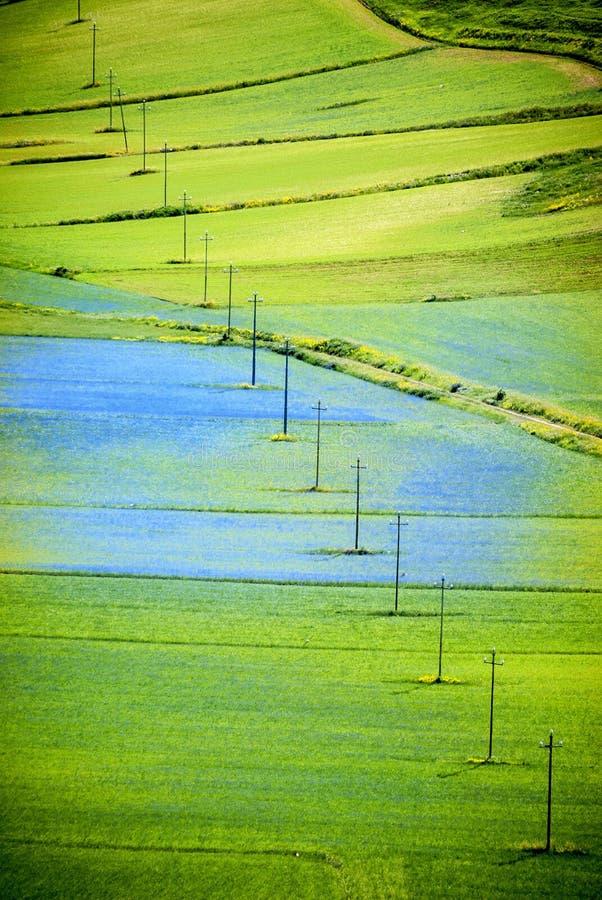 Άνθισμα Castelluccio Di Norcia στην Ιταλία στη μεγάλη πεδιάδα στην περιοχή της Ουμβρίας της Ιταλίας στοκ φωτογραφία