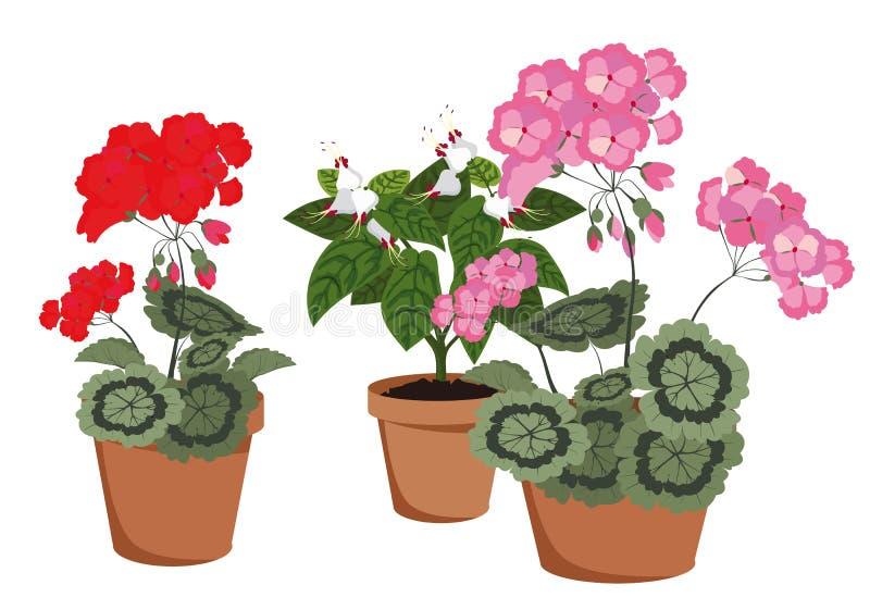 Άνθισμα houseplants απεικόνιση αποθεμάτων