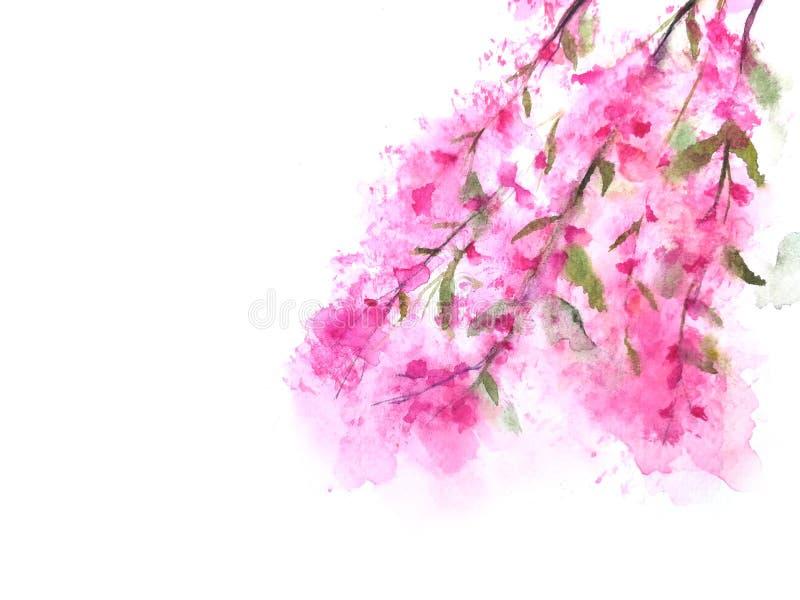 Άνθος ή sakura κερασιών Watercolor στοκ εικόνα