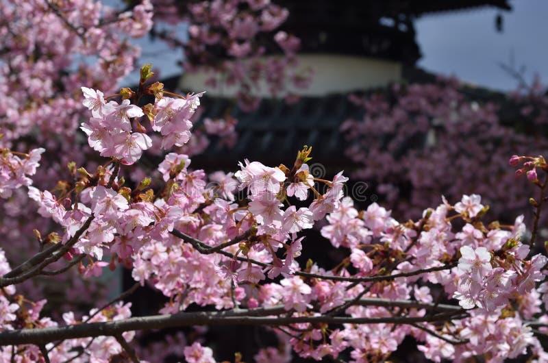 Άνθος κερασιών και ναός, Κιότο Ιαπωνία στοκ εικόνα