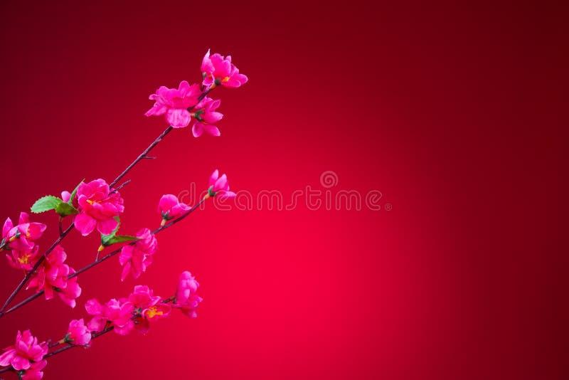 Άνθος κερασιών κατά τη διάρκεια του κινεζικού νέου έτους με το κόκκινο υπόβαθρο στοκ φωτογραφίες με δικαίωμα ελεύθερης χρήσης