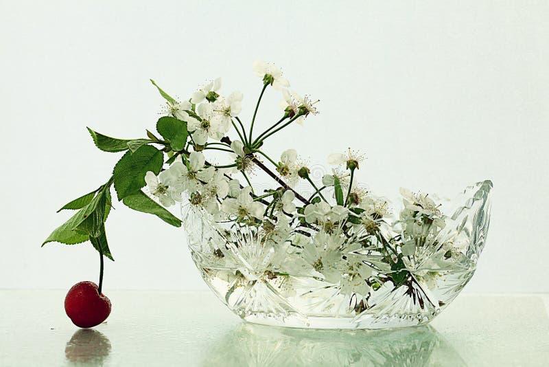 Άνθος κερασιών στο άσπρο υπόβαθρο γυαλιού στοκ φωτογραφία