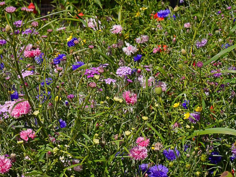 Άνθος σε έναν αγγλικό κήπο σε Lancashire στοκ εικόνες με δικαίωμα ελεύθερης χρήσης