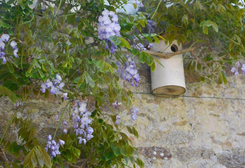 Άνθος Wisteria και birdhouse στοκ εικόνες με δικαίωμα ελεύθερης χρήσης