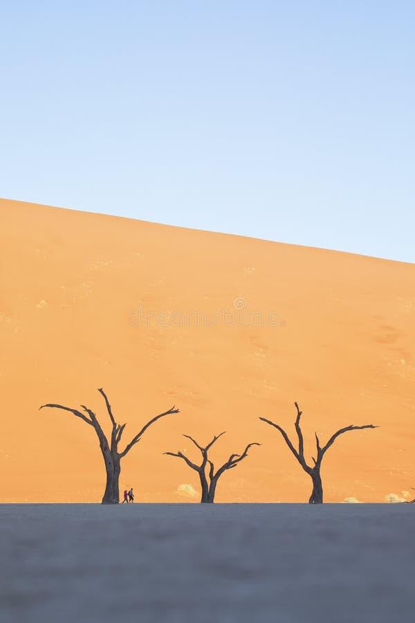 Άνθρωποι ενάντια σε ένα σύνολο δέντρων στοκ εικόνα με δικαίωμα ελεύθερης χρήσης